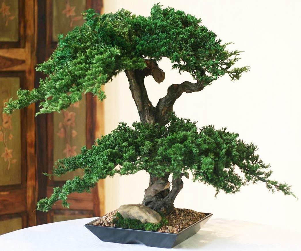 Artificial Bonsai Tree.